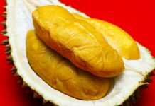 Export Grade Musang King Durian Sinnaco