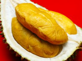 Export Grade Musang King Durian Sinnaco